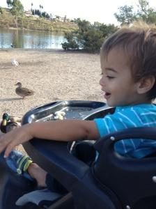 feeding ducks 4