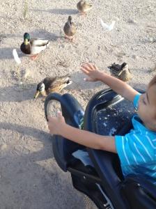 feeding ducks2